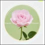 50 Sementes De Rosas Rosa - Rosa Rara - Frete Grátis
