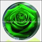 50 Sementes De Rosas Verdes - Rosa Rara - Frete Grátis