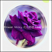 50 Sementes De Rosas Purporas - Rosa Rara - Frete Grátis