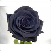 50 Sementes De Rosas Pretas - Rosa Rara - Frete Grátis