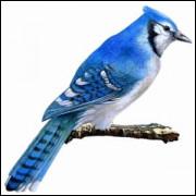 Imãs de Geladeira - Passarinho Azul