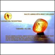 #18 AMBAR DO BALTICO COM INCLUSAO DE INSETO