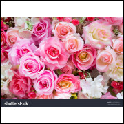 Painel Tecido Sublimado Rosas 2,5 Alt X 3,0 Larg Sem Emenda